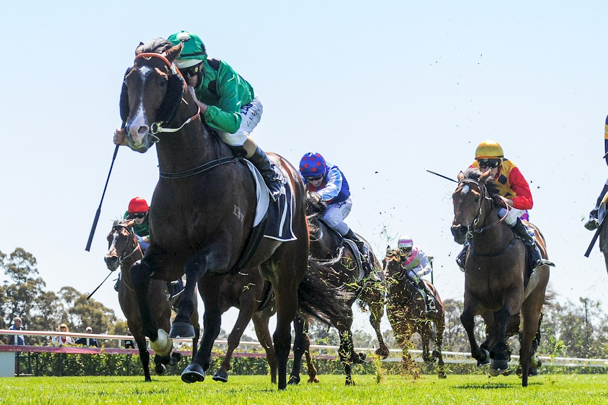 Prince of Caviar ridden by Luke Nolen wins the Share Media Maiden Plate at Bendigo Racecourse on September 27, 2018 in Bendigo, Australia. (Brett Holburt/Racing Photos)