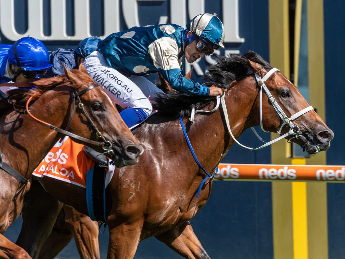 Blue Diamond Stakes Day at Caulfield Racecourse in Melbourne. Saturday 22 February 2020 Photo Credit: (Darren Tindale - The Image is Everything)